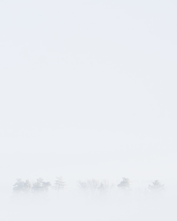fog; negative space; photography; trees; winter